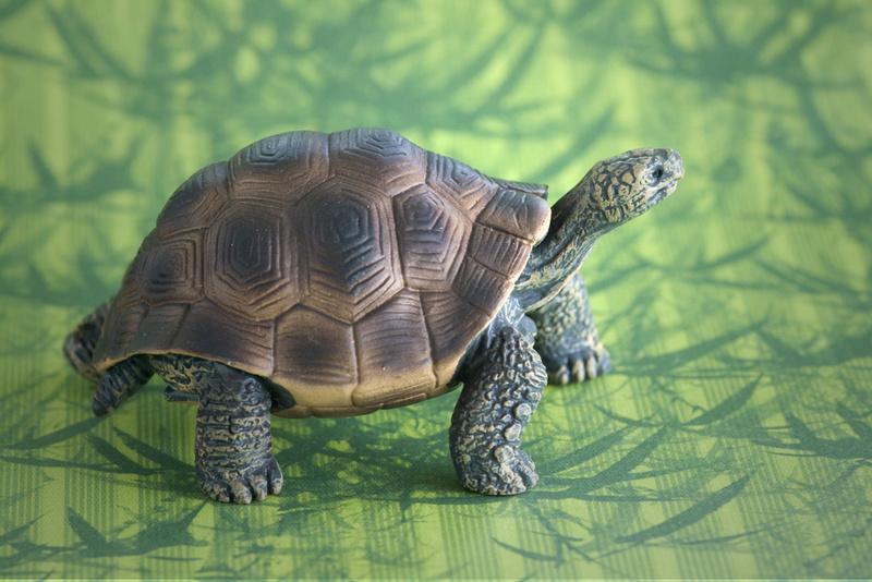 Mojo fun tortoise 2017 - walk around by Ana _mg_6921