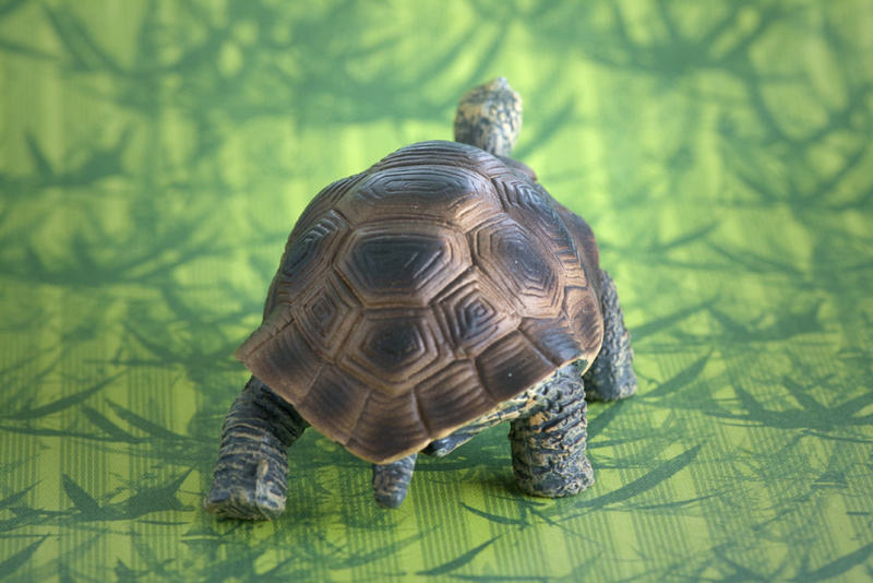 Mojo fun tortoise 2017 - walk around by Ana _mg_6922