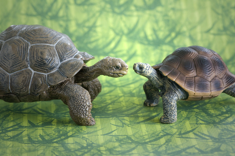 Mojo fun tortoise 2017 - walk around by Ana _mg_6923