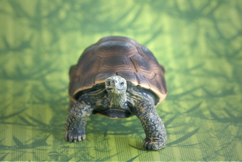 Mojo fun tortoise 2017 - walk around by Ana _mg_6925