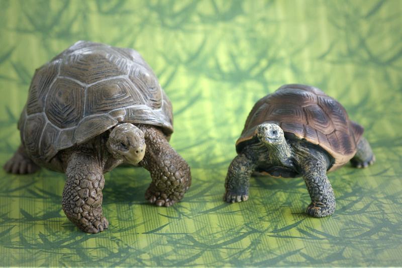 Mojo fun tortoise 2017 - walk around by Ana _mg_6926