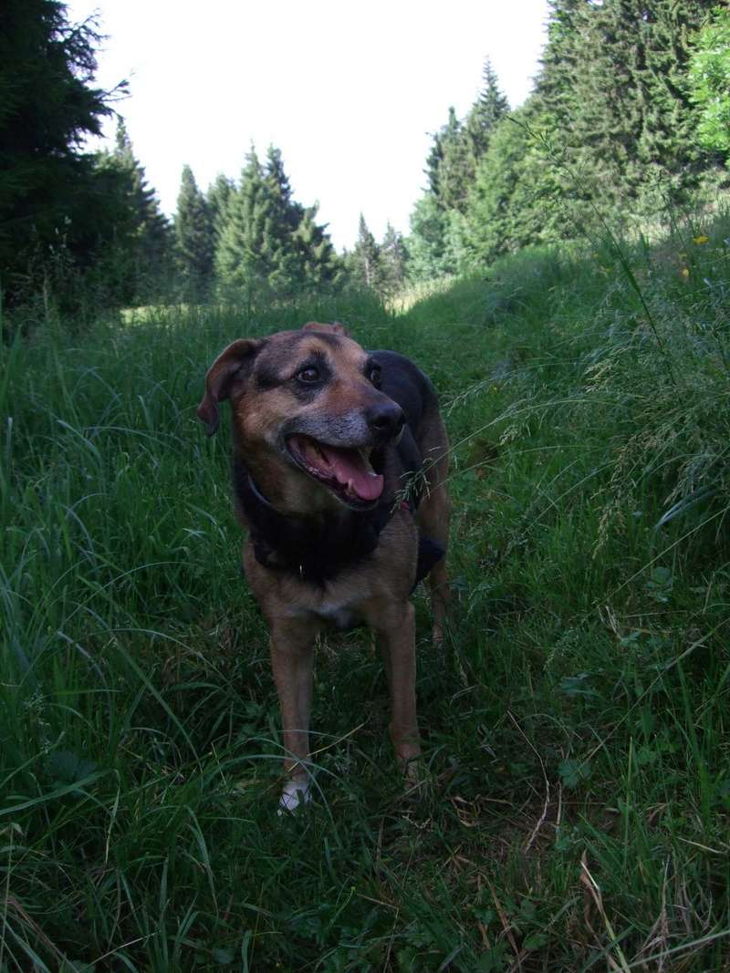 Balades canines: Pays de Gex/Jura/Genève ou Albertville (73) - Page 5 Dscf1810