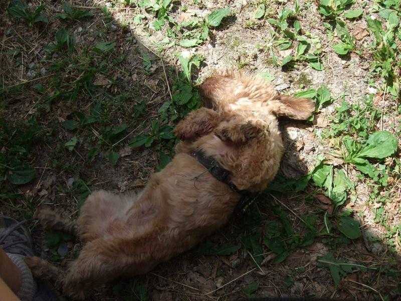 Balades canines: Pays de Gex/Jura/Genève ou Albertville (73) - Page 5 Dscf1811