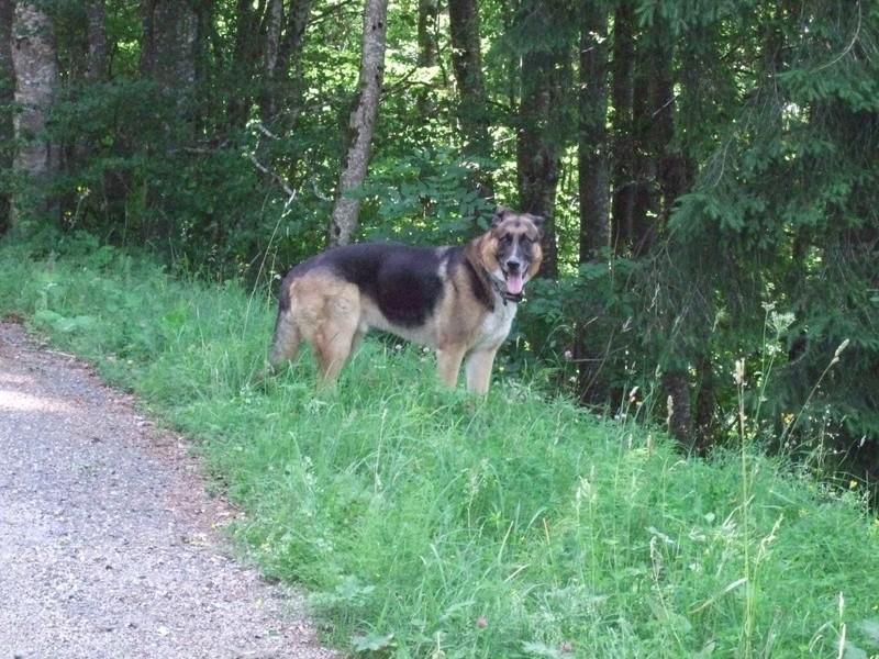 Balades canines: Pays de Gex/Jura/Genève ou Albertville (73) - Page 5 Dscf1813