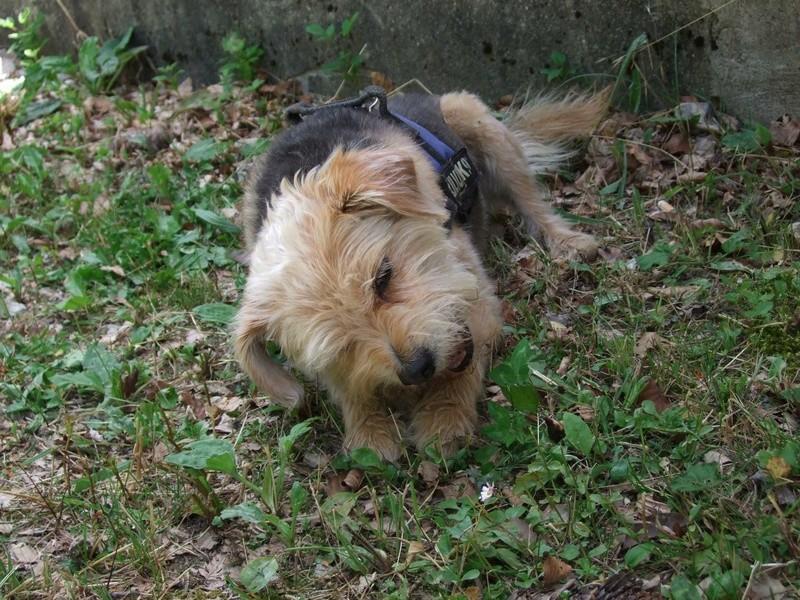 Balades canines: Pays de Gex/Jura/Genève ou Albertville (73) - Page 5 Dscf1815