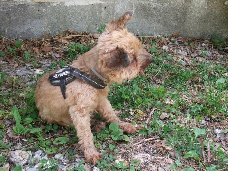 Balades canines: Pays de Gex/Jura/Genève ou Albertville (73) - Page 5 Dscf1816