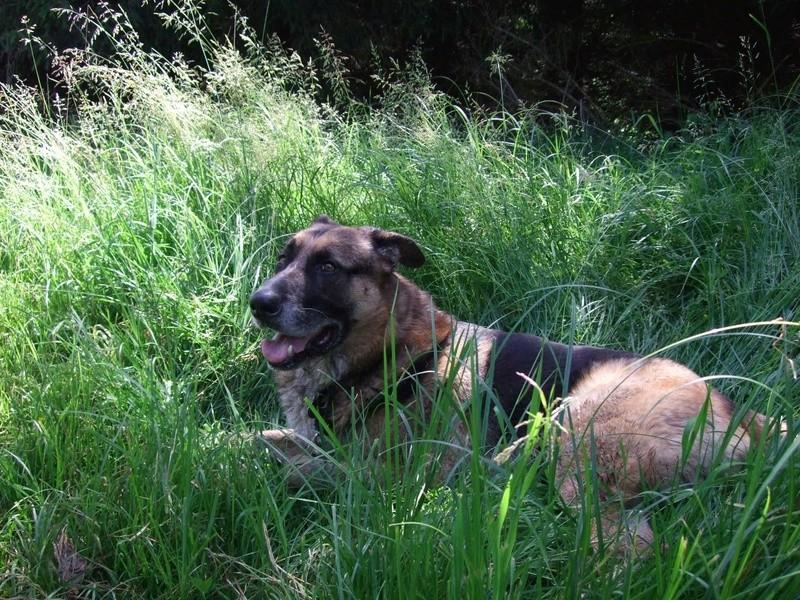 Balades canines: Pays de Gex/Jura/Genève ou Albertville (73) - Page 5 Dscf1817