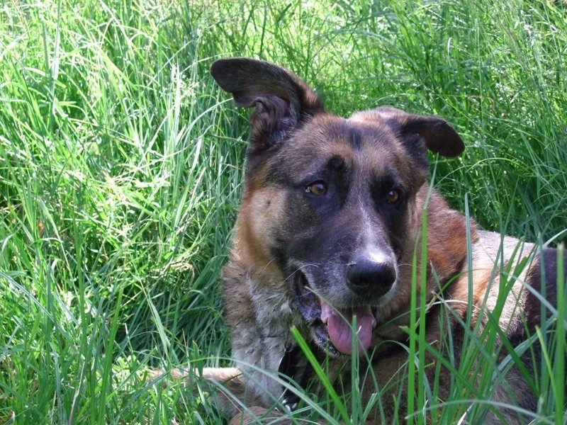 Balades canines: Pays de Gex/Jura/Genève ou Albertville (73) - Page 5 Dscf1819