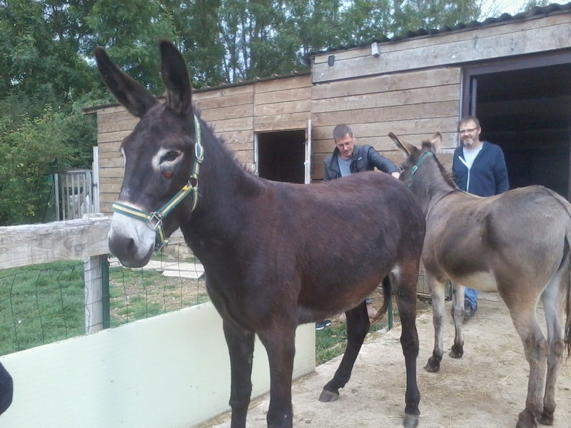 Iroquois, l'âne imprévu ^^ 2017-137