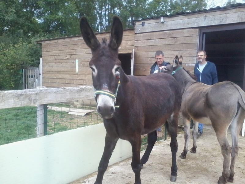 Iroquois, l'âne imprévu ^^ 2017-138