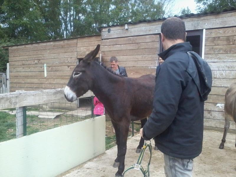 Iroquois, l'âne imprévu ^^ 2017-139