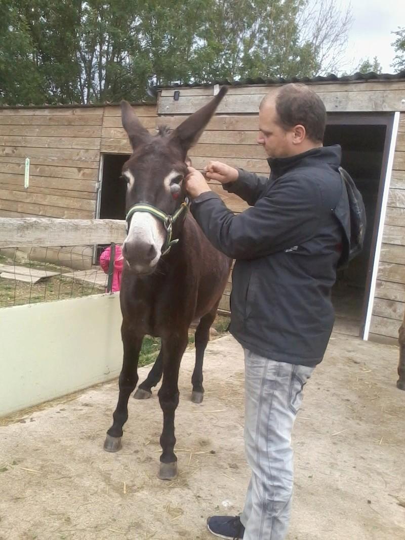 Iroquois, l'âne imprévu ^^ 2017-140