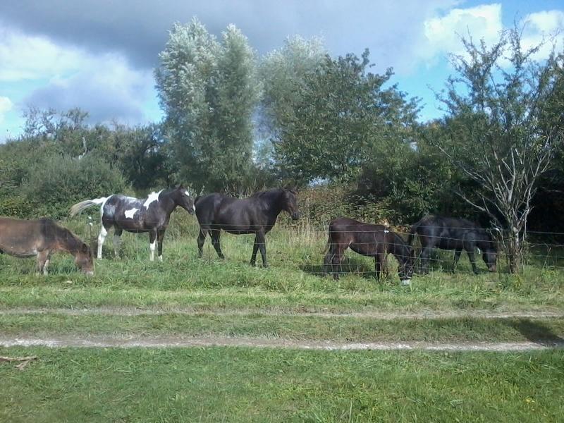Iroquois, l'âne imprévu ^^ 2017-172