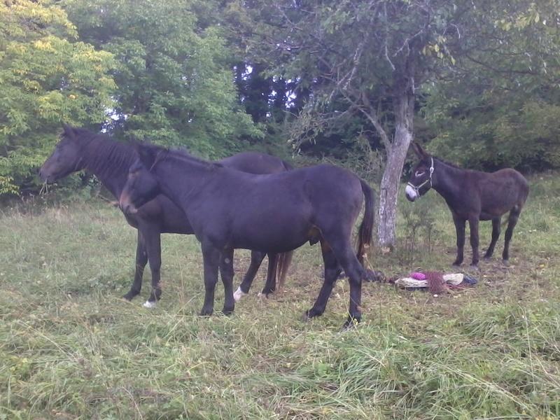 Iroquois, l'âne imprévu ^^ 2017-187