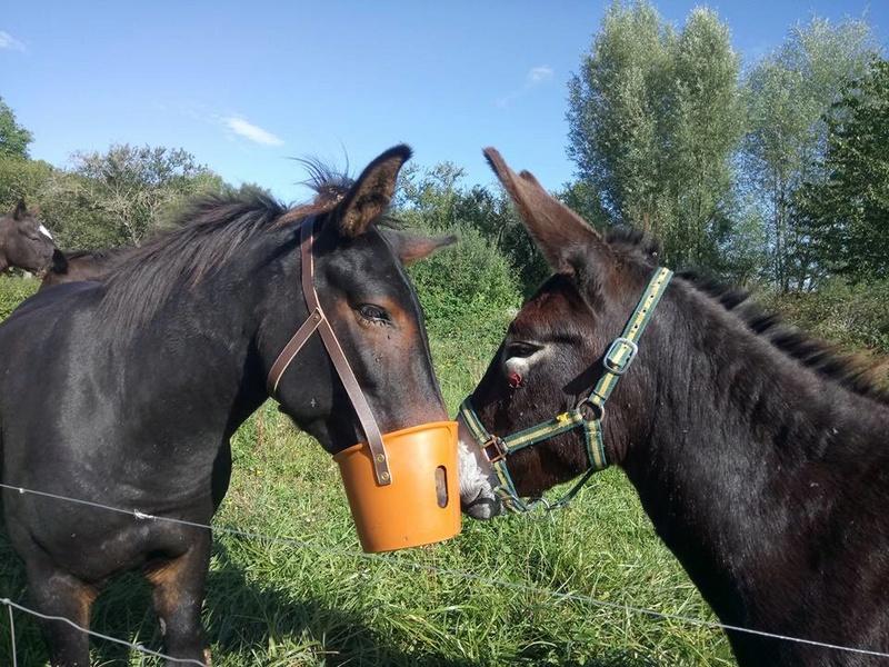 Iroquois, l'âne imprévu ^^ 21557810