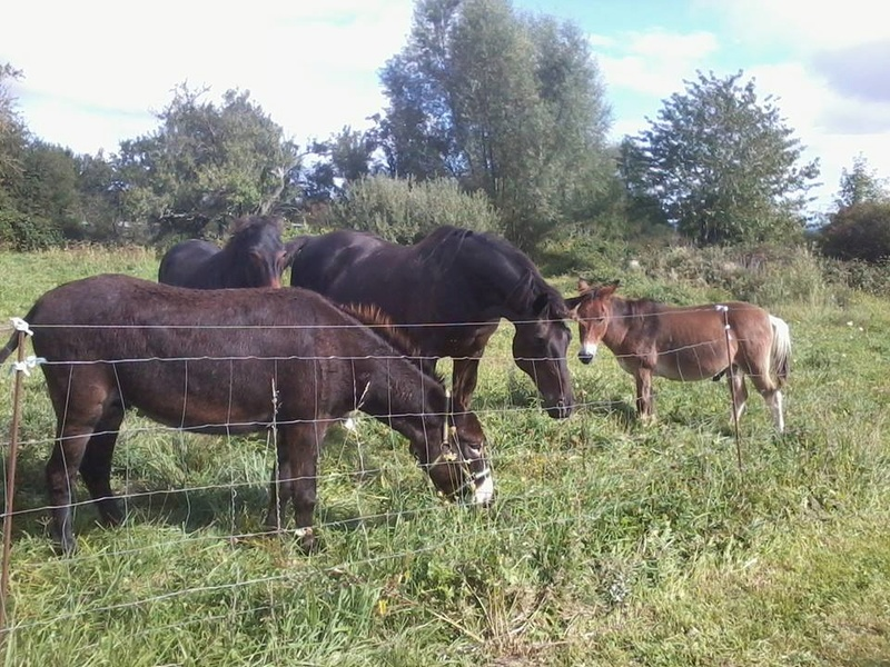 Iroquois, l'âne imprévu ^^ 21558710