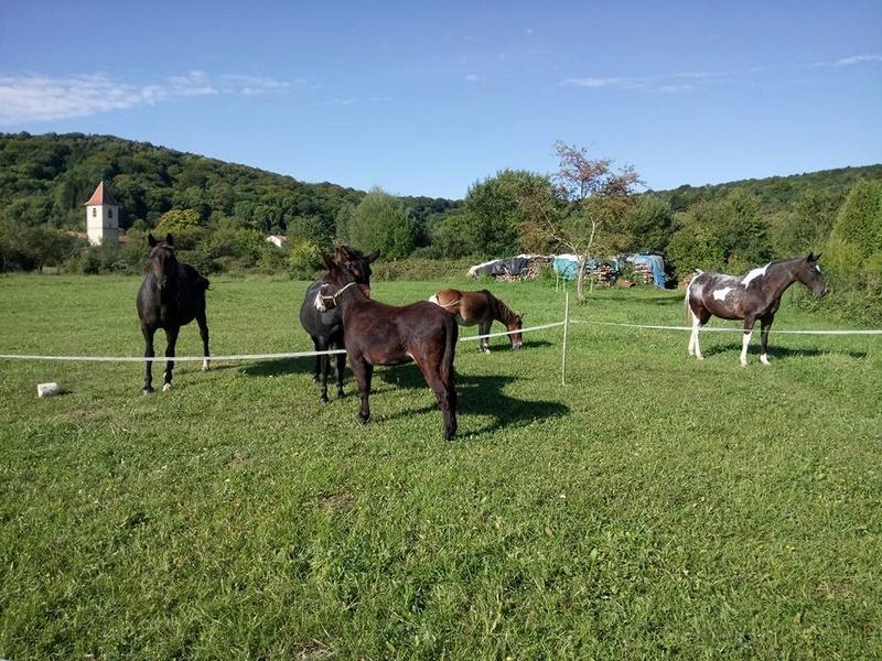 Iroquois, l'âne imprévu ^^ 21751610