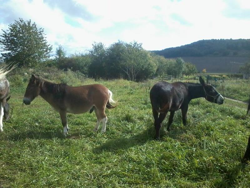 Iroquois, l'âne imprévu ^^ 21761410