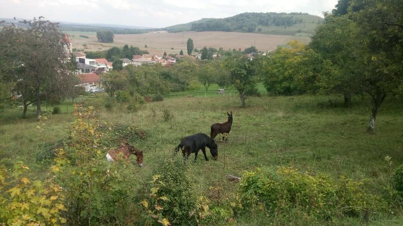 Iroquois, l'âne imprévu ^^ Dsc_0017