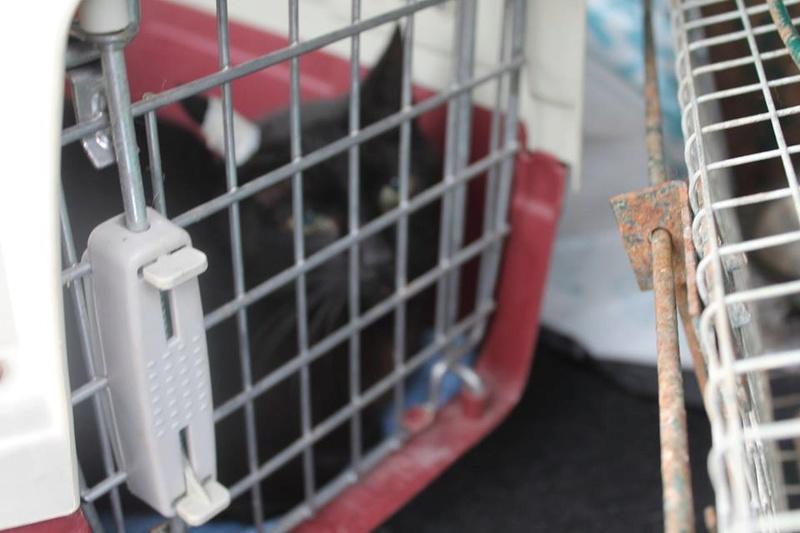 Stérilisation de chats errants dans ma comune 20431210