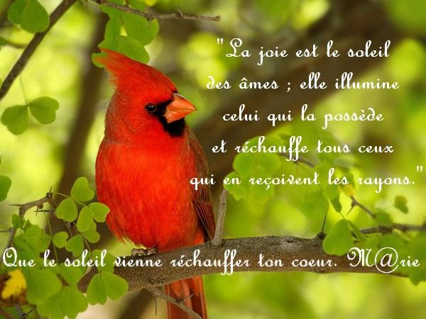 Bonjour...bonne journée...bonsoir...bonne nuit.... - Page 13 61950710