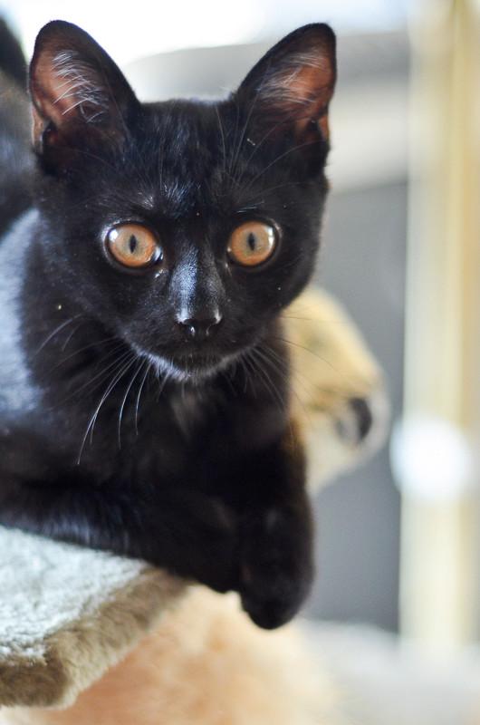 Krokmou, femelle européenne noire née le 10 mai 2017 Krokmo15