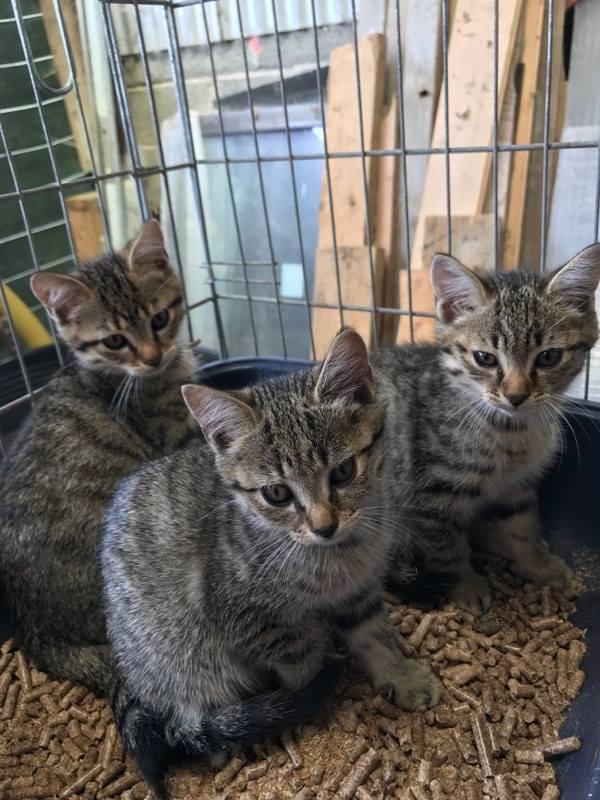 EXTRÊME URGENCE fourrière délai le 28 juillet pour 4 chatons 20271711