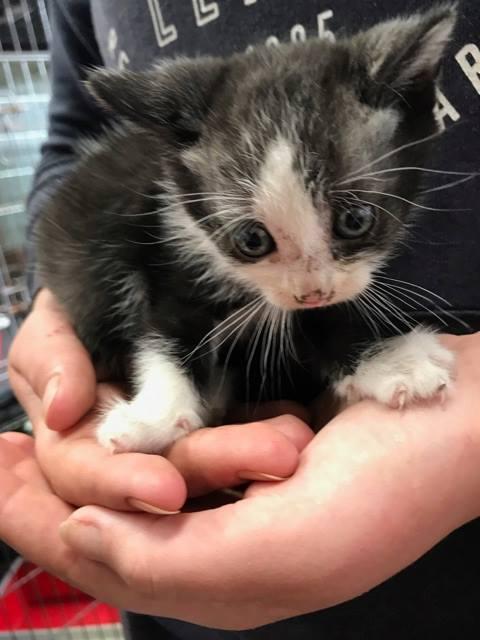 EXTRÊME URGENCE fourrière délai le 7 août pour 4 chatons 20526513