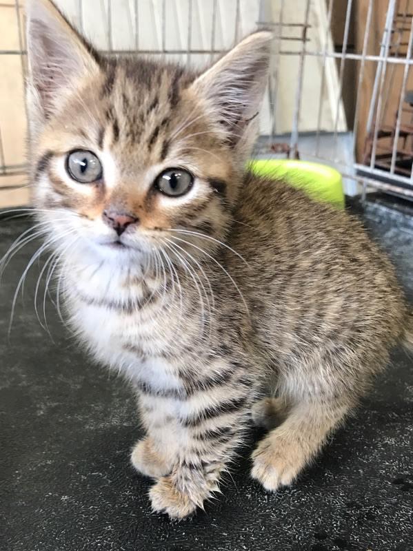 EXTRÊME URGENCE fourrière délai le 12 août pour 2 chats 20667911
