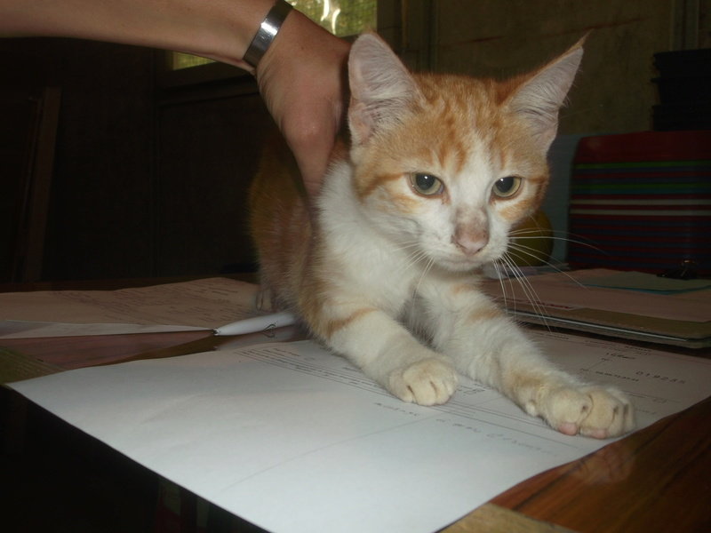 EXTRÊME URGENCE fourrière délai le 28 septembre pour 6 chats Dscf6013