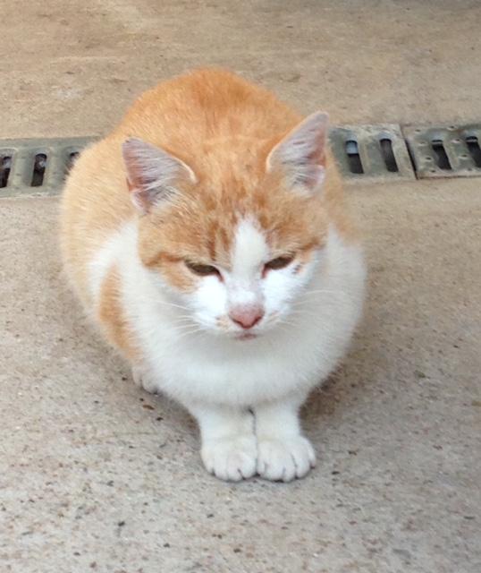 EXTRÊME URGENCE fourrière délai le 3 octobre pour 3 chats Fourri13