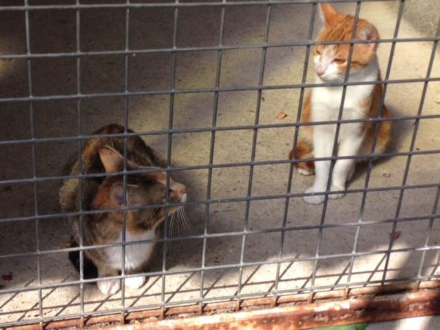 EXTRÊME URGENCE fourrière délai le 3 octobre pour 3 chats Fourri14