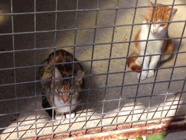 EXTRÊME URGENCE fourrière délai le 3 octobre pour 3 chats Fourri15