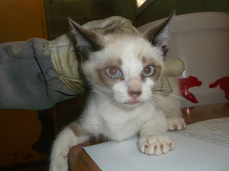 EXTRÊME URGENCE fourrière délai le 10 août pour 15 chats Photos43