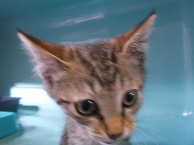 EXTRÊME URGENCE fourrière délai le 10 août pour 15 chats Photos46