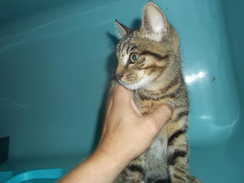 EXTRÊME URGENCE fourrière délai le 25 août pour 7 chats Photos61