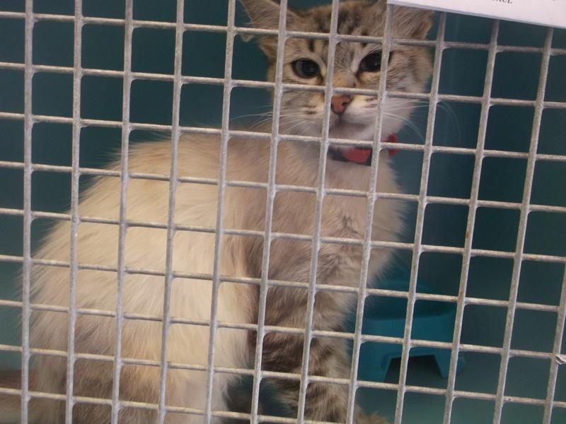 EXTRÊME URGENCE fourrière délai le 25 août pour 7 chats Photos67