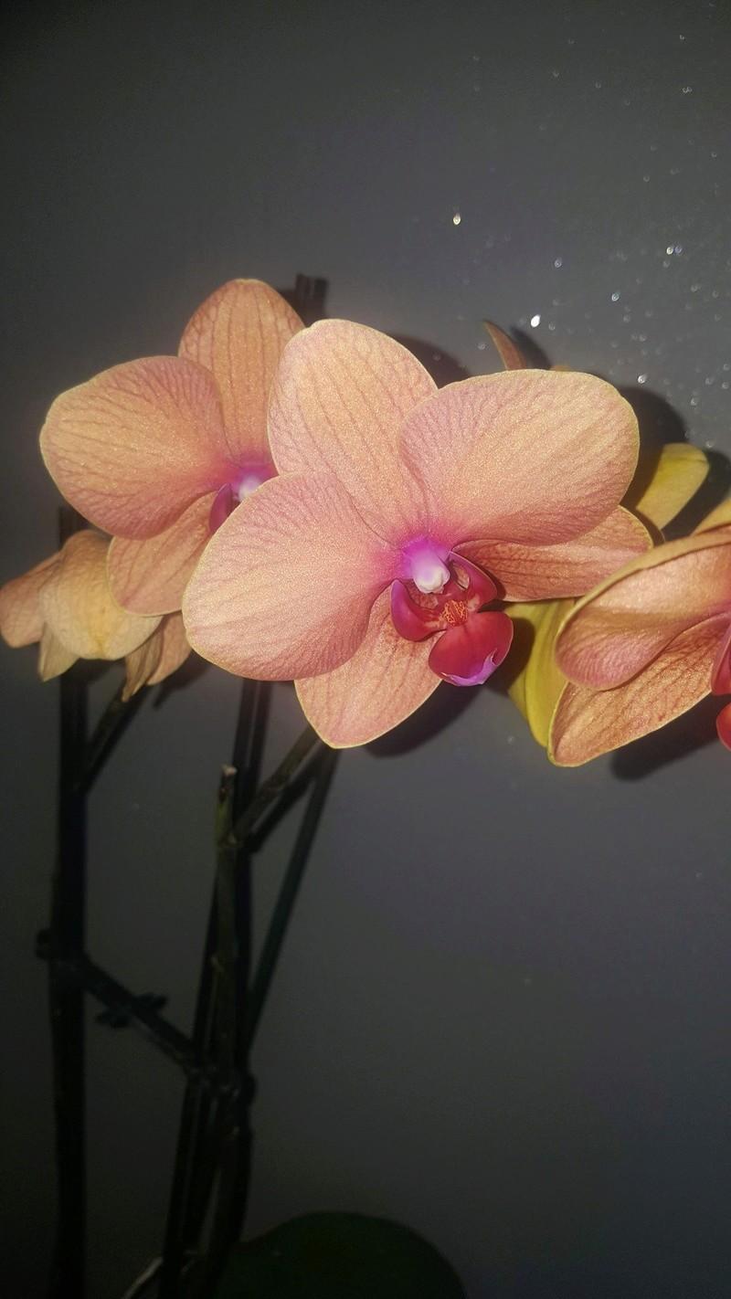Mes orchidées Receiv12