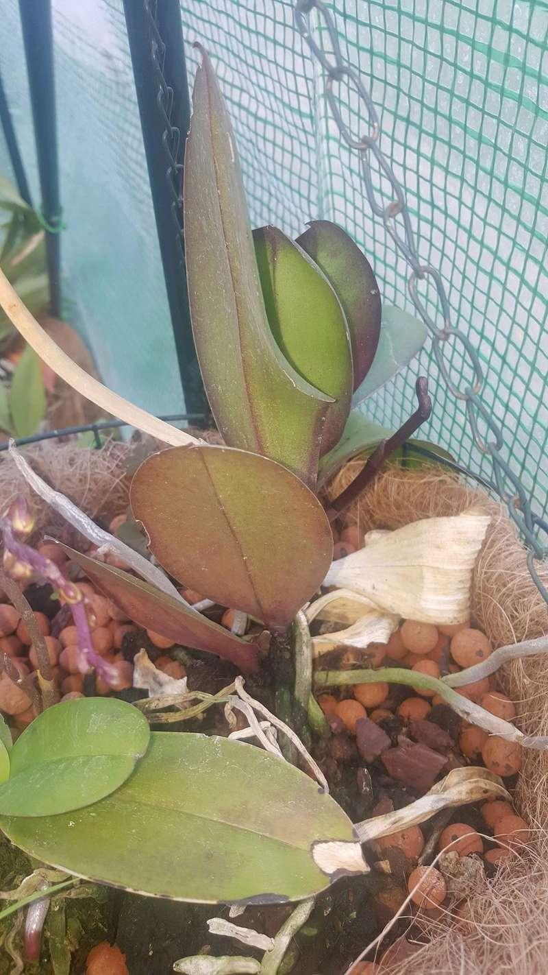 Mes orchidées Receiv13