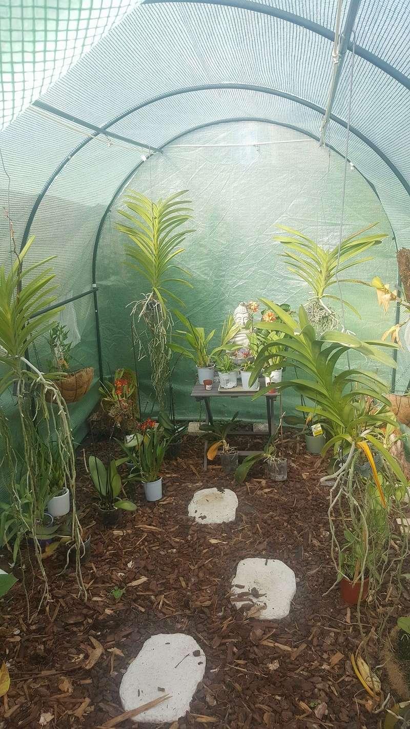 Mes orchidées Receiv15