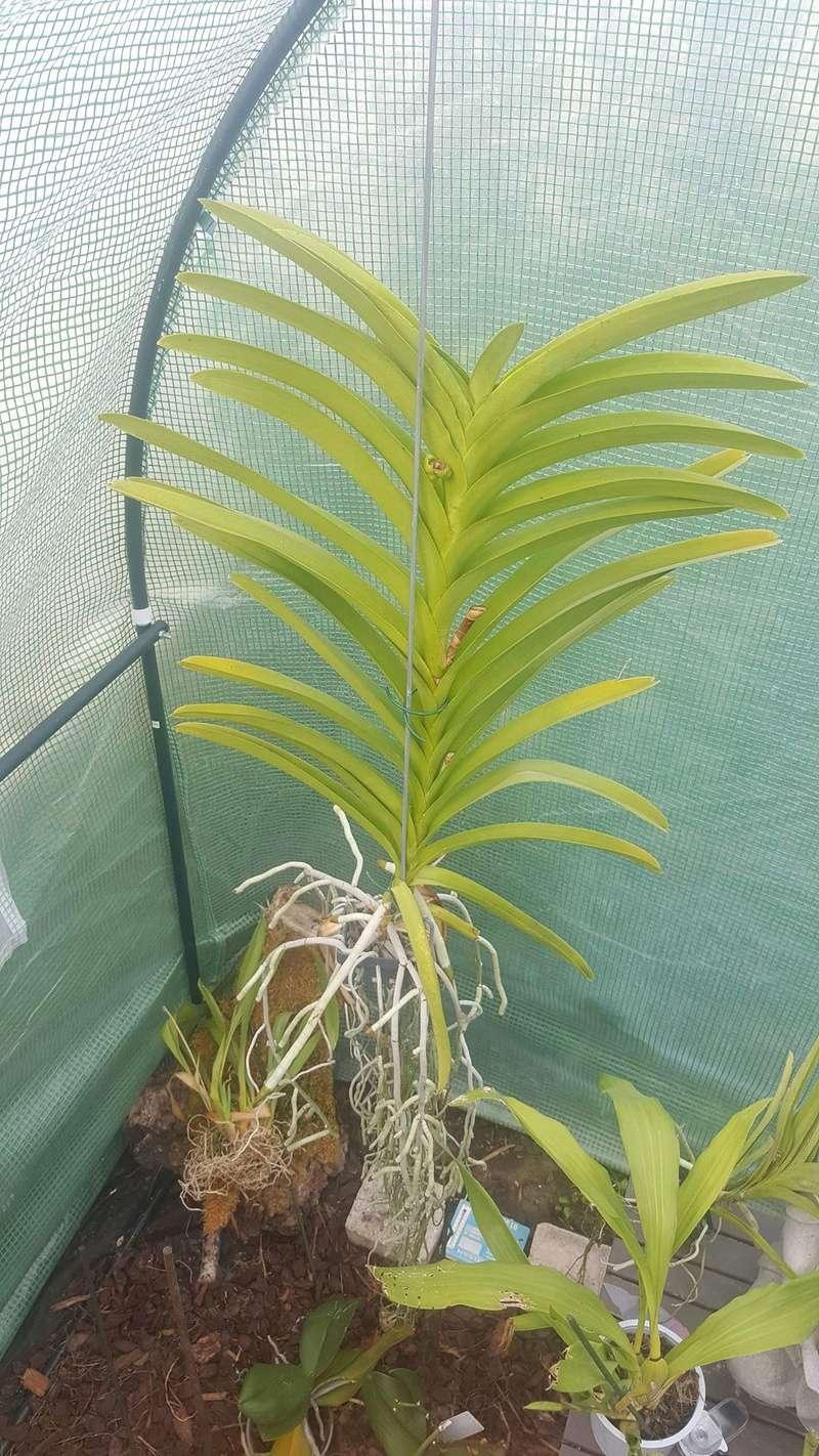 Mes orchidées Receiv16