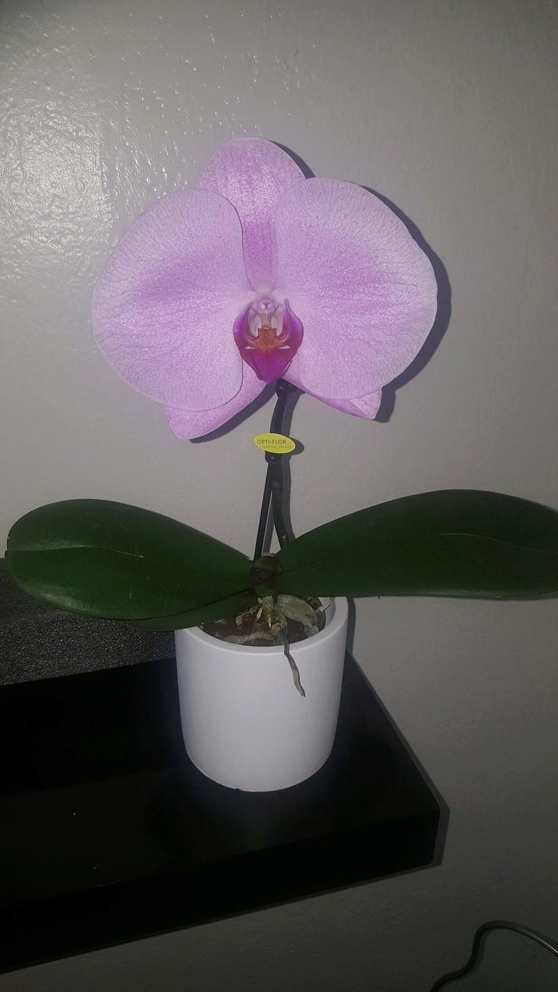 Mes orchidées Receiv17