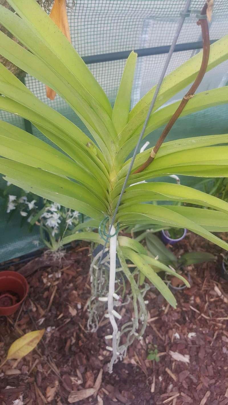 Mes orchidées Receiv18