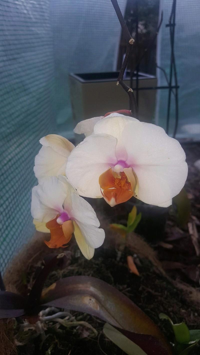 Mes orchidées Receiv19