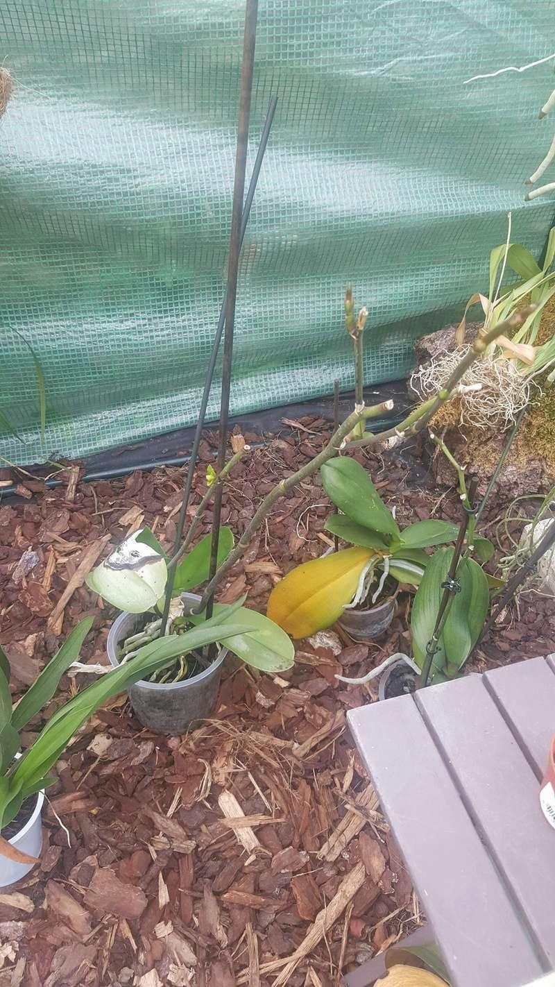 Mes orchidées Receiv20