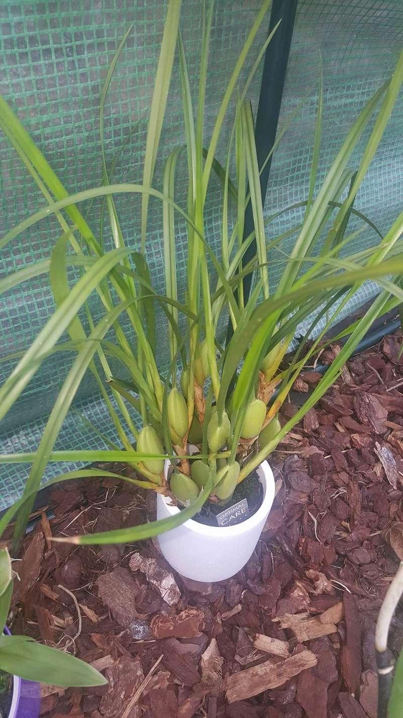 Mes orchidées Receiv21