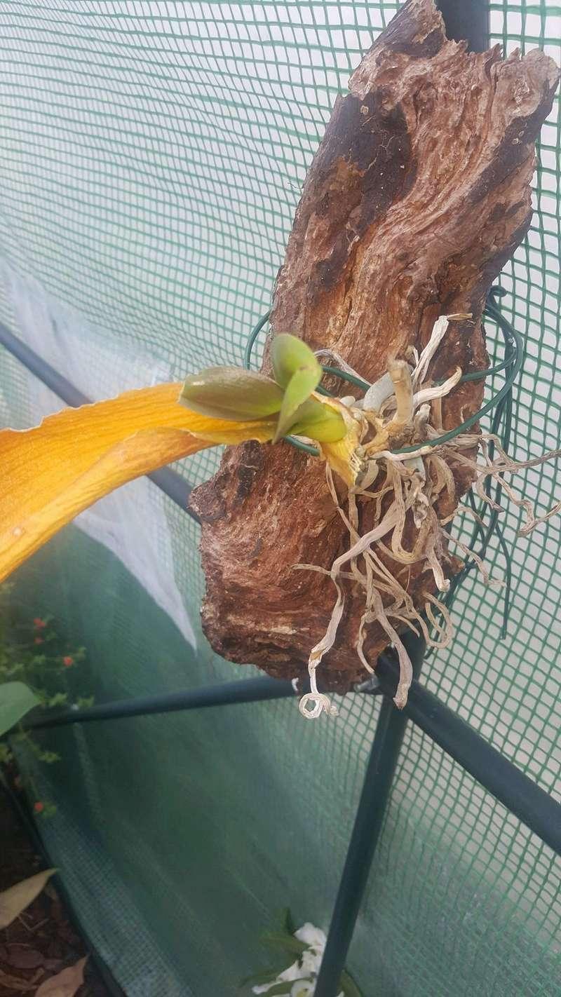 Mes orchidées Receiv22
