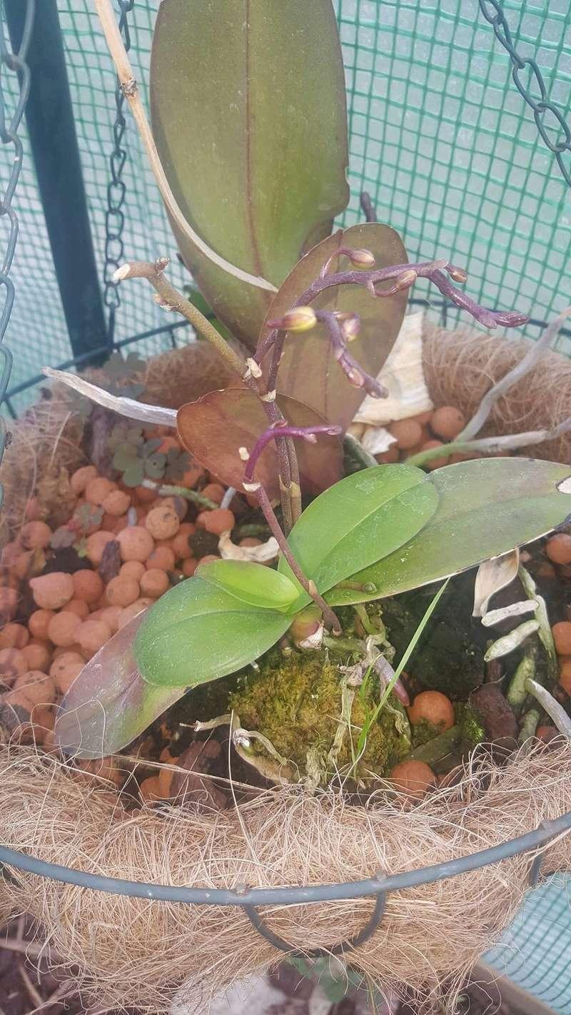 Mes orchidées Receiv26