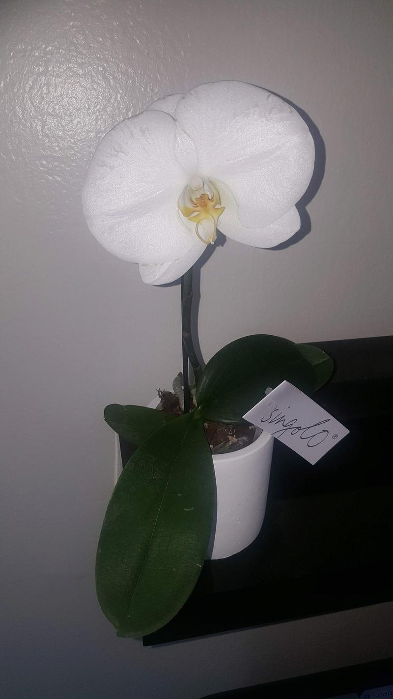 Mes orchidées Receiv28