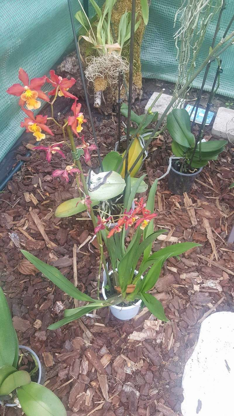 Mes orchidées Receiv30
